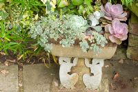 Echeveria and Sedum in ornamental trough stoneware by Gordon Cooke - Hill Top Avenue, Cheshire NGS