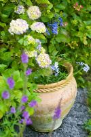 Terracotta pot with Hydrangea, blue Phlox, Agapanthus and  Linaria - Purple Toadflax