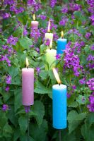 Candles amongst purple Lunaria annua - Honesty at Perch Hill