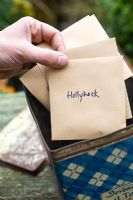 Collecting and storing seeds of Hollyhock