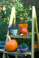 Pumpkin on steps with violas in pots