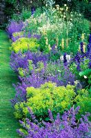 Section of double herbaceous borders - Nepeta 'Six Hills Giant', Alchemilla mollis, Astrantia major, Delphinium, Lupinus 'Russell Hybrids', Aconitum, Hostas - High Glanau Manor, Monmouthshire, Wales