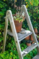 Wooden steps with old clay pots