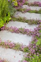Flowering Thyme planted between paving slabs in path - An urban harvest garden - Hampton court 2011