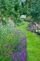 Winding grass path through later summer borders and fruit trees, Verbena rigida, Penstomens, Sanguisorba and Scabious columbaria - Dales Farm, NGS Norfolk