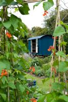 Shephards hut seen through canes of runner beans
