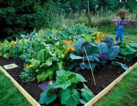 Vegetable tunnel project - Finished potager with scarecrow, cabbages and Calendula