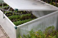 Coldframe with lettuce seedlings