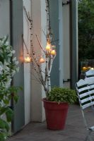 Candles in glasses suspended from Betula - Birch branches in pot with Salvia icetinera