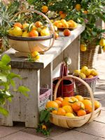 Citrus fruits - Oranges, Mandarins and Lemons in baskets