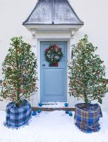 Front door in snow with wreath and Ilex aquilfoliium 'Siberia'  in tartan wrapped pots -  Highfield hollies, Hampshire