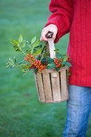 Girl in red jumper carrying wooden basket filled with Ilex aquifolium 'Amber', Ilex 'Handsworth new silver' and Ilex 'WJ Bean'