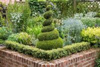 Raised bed in sunken garden with Buxus spiral and low Buxus hedge, Eryngiums, Spirea 'Goldflame' - The Manor House