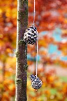 Pine cone stuffed with suet, nuts and seeds to feed garden birds