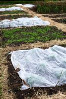 Early vegetables protected by fleece