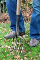 Using fork to aerate lawn