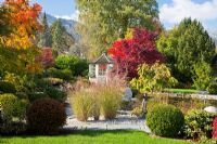Autumn in a Bavarian garden with natural swimming pool, a white painted wooden pavilion and groups of Buxus spheres. Plants include - Acer palmatum, Acer saccharinum, Betula pendula, Miscanthus sinensis, Pinus, Rhododendron,  Taxus baccata and Wisteria