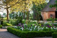 Recently designed garden fits together with the ancient structures as trees and the brick stone barn in the background. Planting includes - Amelanchier, Tulipa 'Angélique', Tulipa 'Negrita' and Tulipa viridiflora 'Spring Green' - Jens Tippel