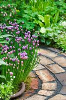 Brick path through border of Aquilegia and Allium schoenoprasum- Chives - 'Pottering in North Cumbria' garden, sponsored by University of Cumbria, Silver Flora medal winner for Courtyard Garden - RHS Chelsea Flower Show 2009