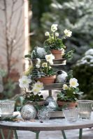 Metal stand with Helleborus niger 'Josef Lemper', silver balls and branches of Abies