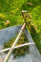 Raking moss on lawn