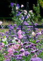Mixed Lathyrus - Sweet Peas and Verbena bonariensis with garden obelisk