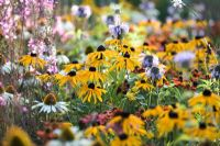 Mixed border with Rudbeckia fulgida, Monarda, Echinacea, Helenium, Gaura lindheimeri and Sanguisorba officinalis 'Pink Tanna'