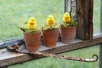 Artificial chicks in moss lined pots on a greenhouse windowsill