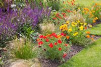 Hot border with Escholzia californica, Salvia nemorosa and Stipa tenuissima