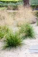 Deschampsia cespitosa growing in sand - Tropical Touch
