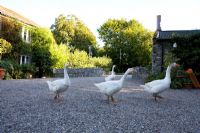 Geese on gravel courtyard - Ballymaloe Cookery School