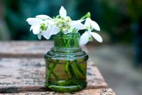 Galanthus nivalis 'Flore Pleno' in glass bottle
