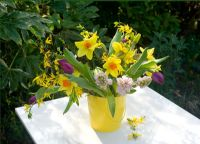 Cut spring flowers - narcissi hyacinths tulips and forsythia