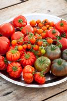 Tomatoes on a silver plate. T. 'Black Krim', 'Sungold', 'Costoluto Fiorentino' and 'Ferline'