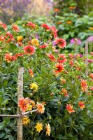 The cutting garden at Perch Hill in late summer with Dahlia 'Jescot Julie' and D. 'Indian Summer' in the foreground