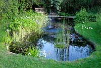 Garden Pond, May. Plants include - Phragmites australis variegatus, Iris, Nymphaea