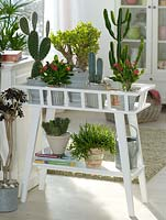 Cacti and Succulents in containers on plant stand
