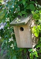 Bird box with Clematis montana 'Marjorie'