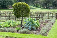Vegetable garden with Levisticum officinale, Cynara scolymus, clipped standard bay tree and  edged with Lavandula and trained fruit trees at Painswick Rococo Gardens, Gloucestershire