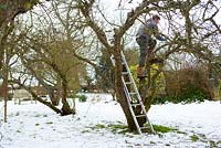 Removing dead and decaying twigs and branches of apple tree
