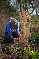 Cutting back seedheads of perennials and ornamental grasses to make room for new growth