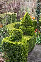 Topiary in garden shaped from Buxus sempervirens