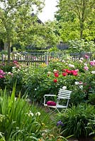 White wooden garden chair in front of flowering peony borders, Cornus kousa, Malus and Robinia