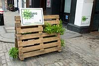 'Garden of Disorientation' - Pop-up mojito bar in a former slaughterhouse in Charterhouse Street, Smithfields, City of London where pots of Mints are displayed in pallets. The mint shown is Moroccan Spearmint  - Chelsea Fringe Festival, London 2012