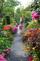 Path through colourful borders of conifers, Camelias, Azaleas and Acers - Four Seasons Garden, Walsall