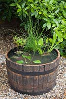 Creating a water feature - fully planted wooden barrel