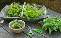 Cutting young salad leaves