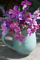 Flower arrangement with Erysimum - perennial Wallflower and Linaria - Toadflax