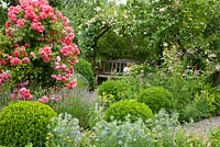 Wooden bench under rose arch in a garden with box spheres. Plants are Rosa 'Rosarium Uetersen', Buxus, Lavandula angustifolia, Nigella damascena and Phlomis russeliana