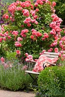 Garden chair next to shrub rose and lavender. Rosa 'Rosarium Uetersen', Buxus and Lavandula angustifolia